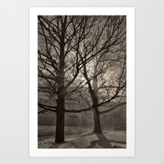 Snow Drifting with Large Trees, Bristol  2013 Art Print
