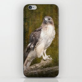 Red Tailed Hawk perched on a branch in the woodlands iPhone Skin