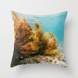 Forest of Seaweed, Seaweed Underwater, Seaweed Shallow Water near surface Throw Pillow