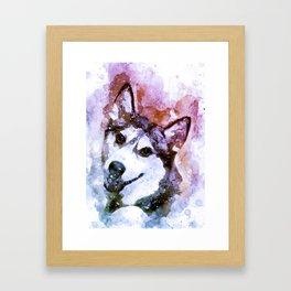 Tika'ani our Siberian Husky Framed Art Print