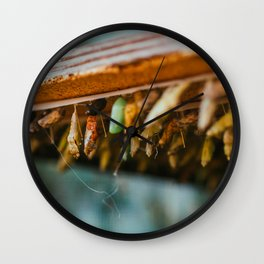 Butterfly Metamorphosis Photograph Wall Clock