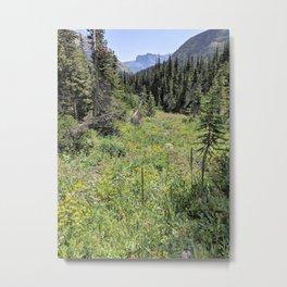 Glacier National Park - Wildflowers Metal Print