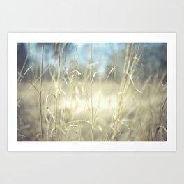 November Field  Art Print