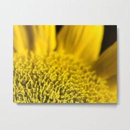 Yellow Disk Sunflower Macro 2 Metal Print