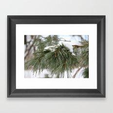 Winter Pine Framed Art Print