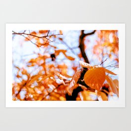 Autumn red foliage Art Print