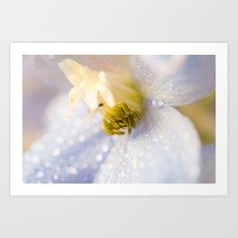 Delphinium Flower with Raindrops 1 Art Print