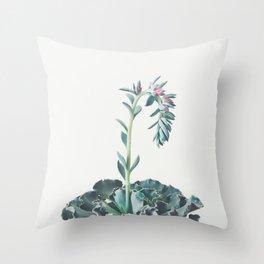 Flowering Succulent II Throw Pillow