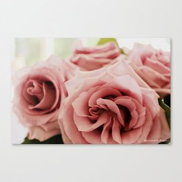 Sterling Roses, No. 1 Canvas Print