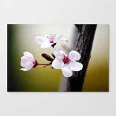 Signs of Spring 3 Canvas Print