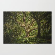 FOREST - TREE - NATURE Canvas Print