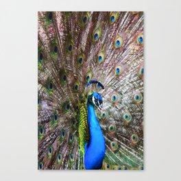 Dunedin Cemetery Peacock Canvas Print