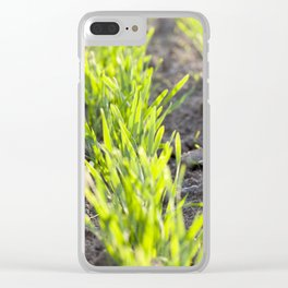 green sprouts of wheat Clear iPhone Case