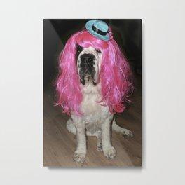 Funny St Bernard dog clowning around Metal Print