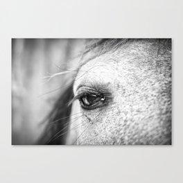 Soulful Horse Eye Photograph by Priya Ghose  Canvas Print
