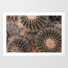 Cactus, Cacti, Cactuses Art Print