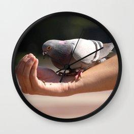 Feeding the pigeon Wall Clock