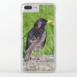 Starling Clear iPhone Case