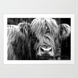 Highland Cow Art Print