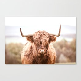 Highland Cow in a Field Southern Canvas Print