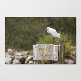 Snowy Egret at Quilty Cove Canvas Print