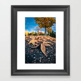 Fisheye Autumn  Framed Art Print