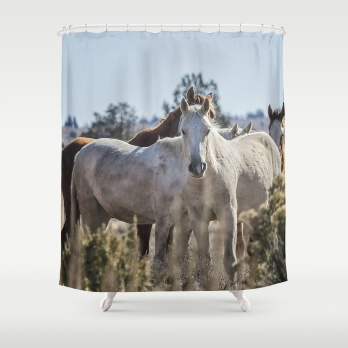 Traveler And His Bachelor Band Shower Curtain By Belindagreb