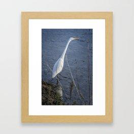 Great Egret at Delta Ponds, No. 2 Framed Art Print