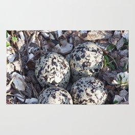 Killdeer eggs in nest Rug