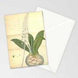Flower ornithogalum elatum Lofty Ornithogalum Stationery Cards