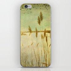 Winter Grass iPhone & iPod Skin