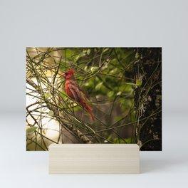 The Cardinal  Mini Art Print