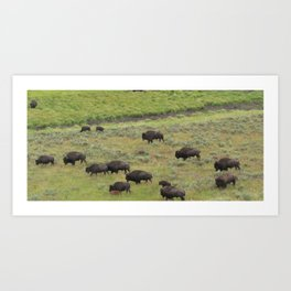 Where the Buffalo/Bison Roam #2 Art Print
