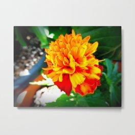 Orange Flowers 3 Metal Print