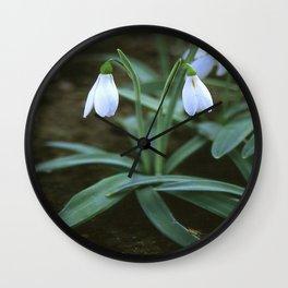 Crimean Snowdrop Closeup  Wall Clock