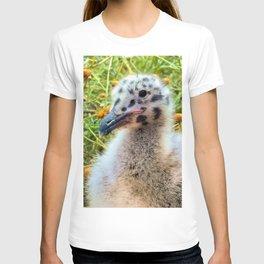 California Gull Chick T-shirt