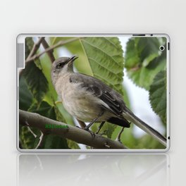 Mockingbird in a Mulberry Tree Laptop & iPad Skin