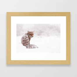 A Fox Fantasy (Red Fox in the snow)  Framed Art Print