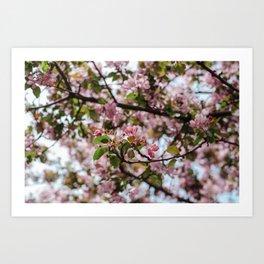 Yorkville Blossoms Art Print