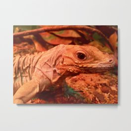 Lazy Lizard Metal Print