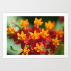 Exotic Flower  411 Art Print