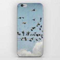 Fly iPhone & iPod Skin