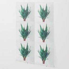 Yucca Wallpaper