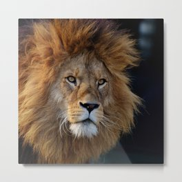 Lion_20180712_by_JAMFoto Metal Print
