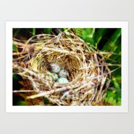 Birds :: Our Nest Art Print