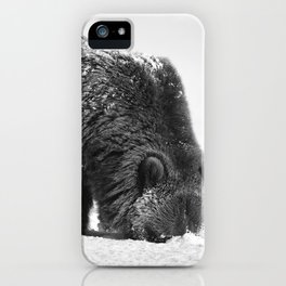 Alaskan Grizzly Bear in Snow, B & W - 2 iPhone Case
