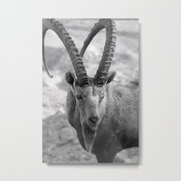 Ibex~Black & White Metal Print