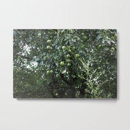 Summer Apples Metal Print