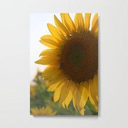 The Punjab Sunflower Metal Print