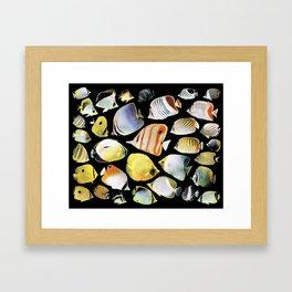 Butterflyfish_Black base Framed Art Print